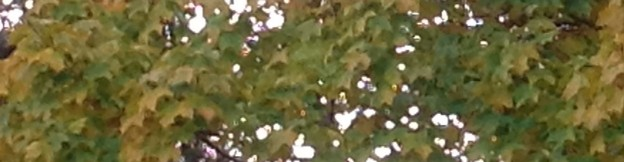 cropped-trees-turning.jpg