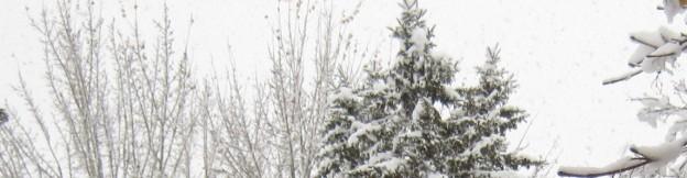 cropped-snowy-tree1.jpg