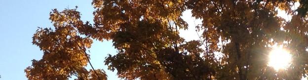 cropped-2012-09-29-10-04-41.jpg